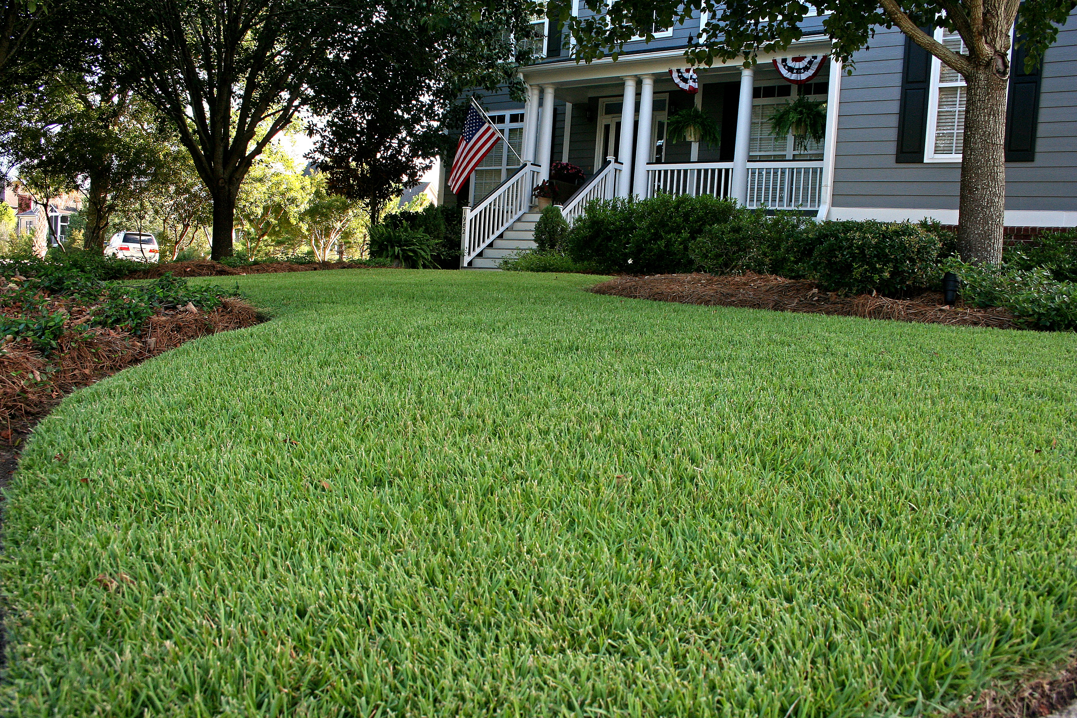 empire zoysia atlanta turfgrass